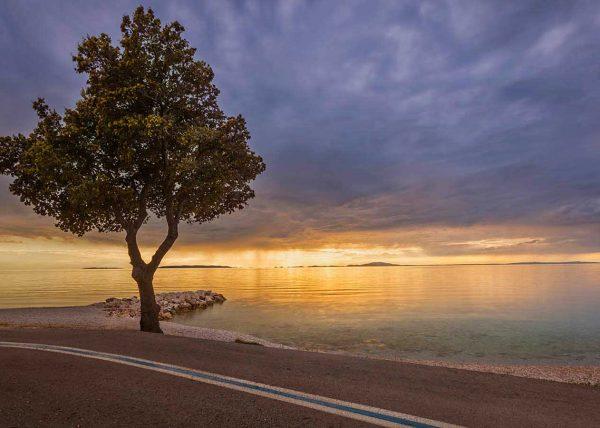 Fotografia drzewa nad morzem